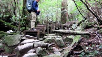 http://www.comfortablelife.asia/images/2011/04/Ttrekking-to-Jomon-Sugi_169-330x185.jpg