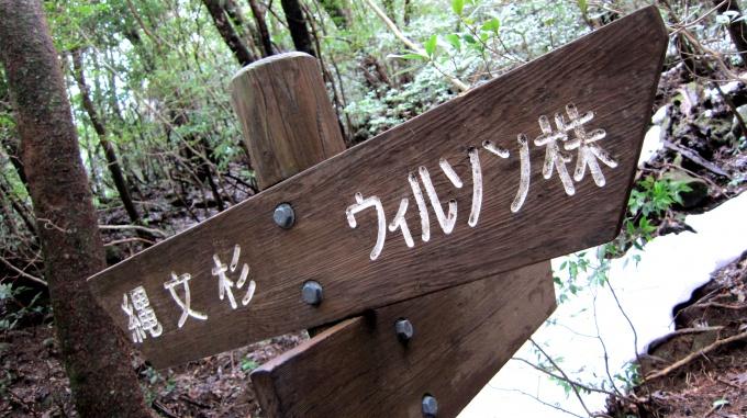 http://www.comfortablelife.asia/images/2011/04/Ttrekking-to-Jomon-Sugi_192.jpg