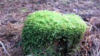http://www.comfortablelife.asia/images/2011/04/Ttrekking-to-Jomon-Sugi_81-330x185.jpg