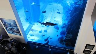 http://www.comfortablelife.asia/images/2011/07/20-DubaiAquarium_041-330x185.jpg