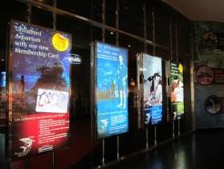 http://www.comfortablelife.asia/images/2011/07/20-DubaiAquarium_045-246x185.jpg