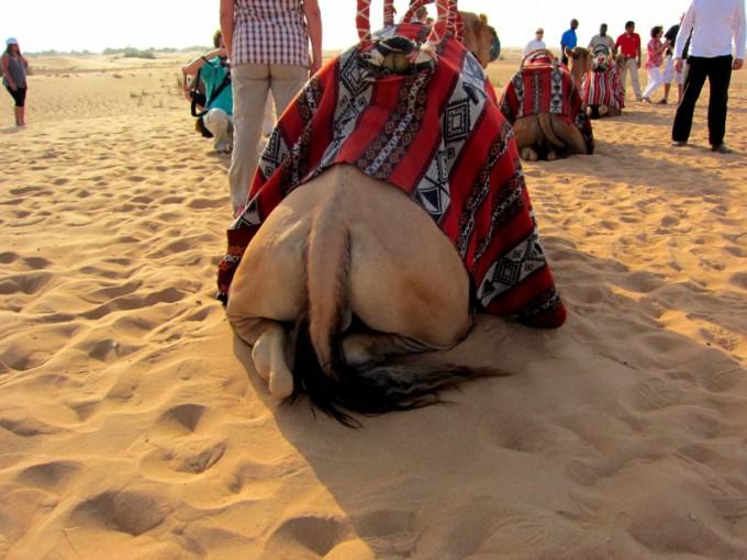 http://www.comfortablelife.asia/images/2011/08/08-Desert-Safari_002-680x510.jpg