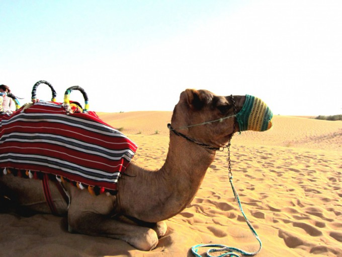 http://www.comfortablelife.asia/images/2011/08/08-Desert-Safari_003-680x510.jpg