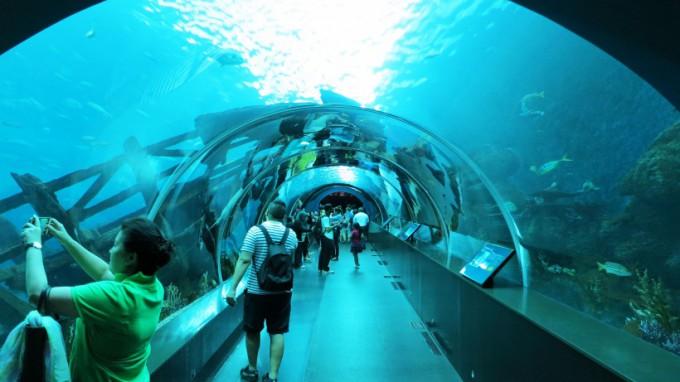 SEA_Aquarium.2014_08