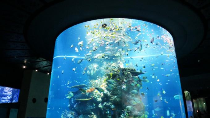 SEA_Aquarium.2014_13