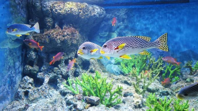 SEA_Aquarium.2014_14